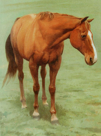 oil portrait of a horse
